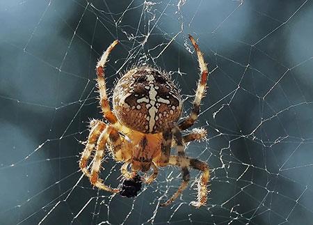Örümcek korkusu Araknofobi