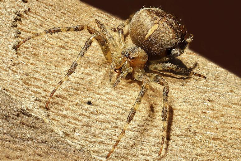 Örümcek korkusu belirtileri nedir
