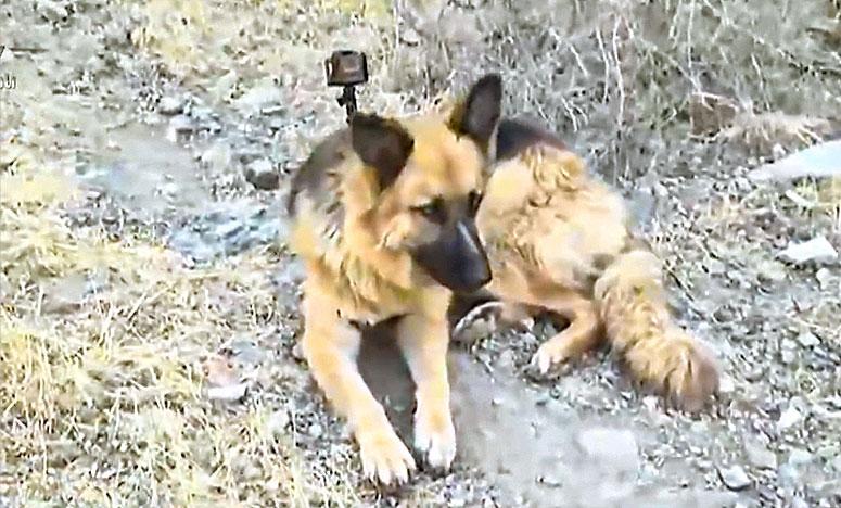 Mehmet Ali Koran Kaybı Köpek Betty